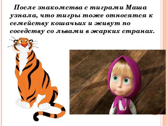 После знакомства с тиграми Маша узнала, что тигры тоже относятся к семейству...
