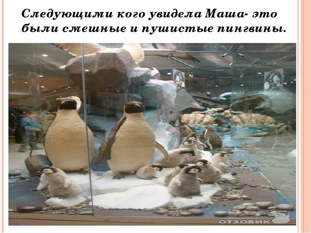 Следующими кого увидела Маша- это были смешные и пушистые пингвины.