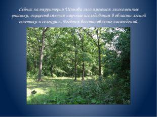 Сейчас на территории Шипова леса имеются лесосеменные участки, осуществляются
