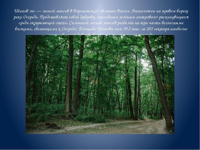 Шипов лес — лесной массив в Воронежской области России. Расположен на правом...