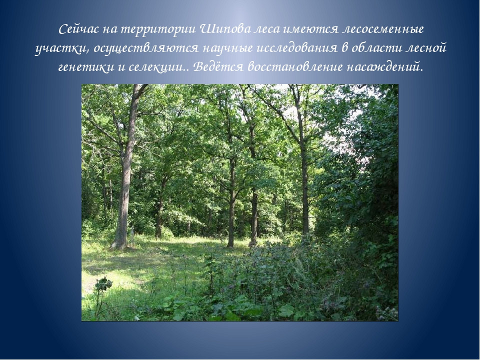 Сейчас на территории Шипова леса имеются лесосеменные участки, осуществляются...