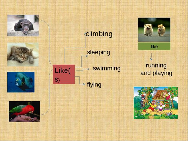 Like(s) climbing sleeping swimming flying like running and playing