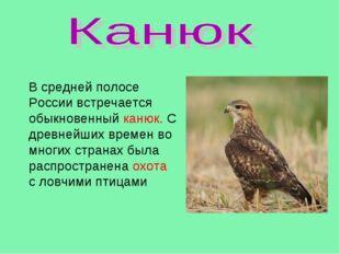 В средней полосе России встречается обыкновенный канюк. С древнейших времен в