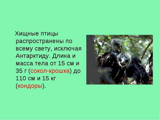 Хищные птицы распространены по всему свету, исключая Антарктиду. Длина и мас...