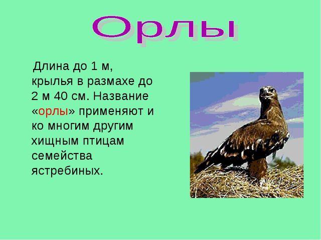 Длина до 1 м, крылья в размахе до 2 м 40 см. Название «орлы» применяют и ко...