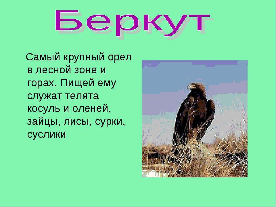 Самый крупный орел в лесной зоне и горах. Пищей ему служат телята косуль и о...