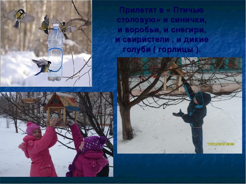 Прилетят в « Птичью столовую» и синички, и воробьи, и снегири, и свиристели ,...