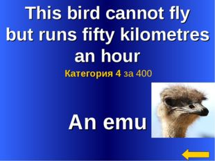 This bird cannot fly but runs fifty kilometres an hour An emu Категория 4 за