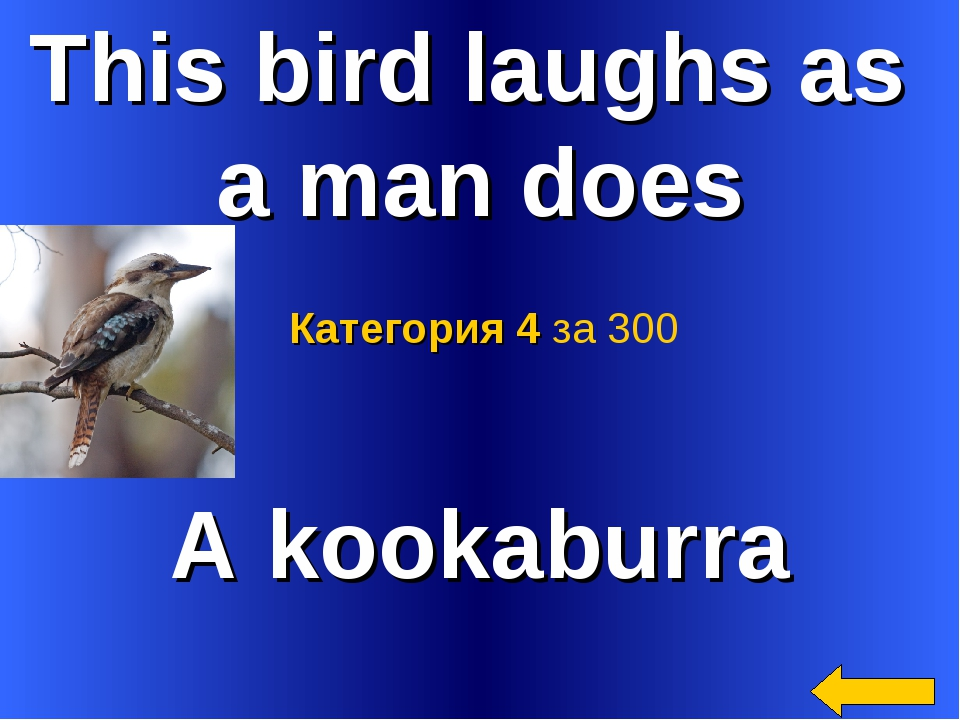 This bird laughs as a man does A kookaburra Категория 4 за 300