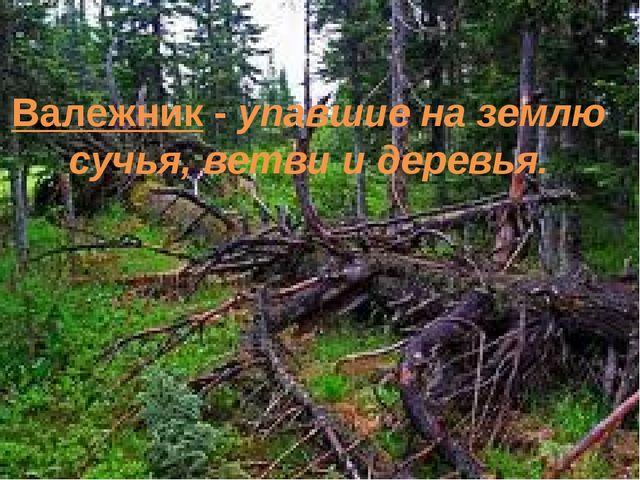 Валежник - упавшие на землю сучья, ветви и деревья.