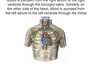 Blood is pumped from the right atrium to the right ventricle through the tric