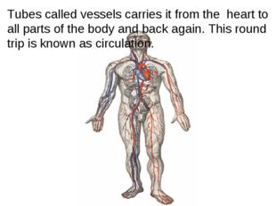 Tubes called vessels carries it from the heart to all parts of the body and
