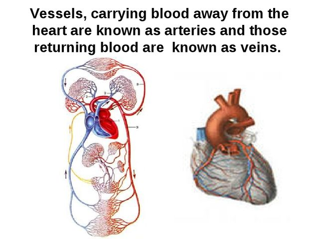 Vessels, carrying blood away from the heart are known as arteries and those r...