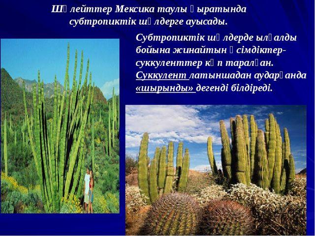 Шөлейттер Мексика таулы қыратында субтропиктік шөлдерге ауысады. Субтропиктік...