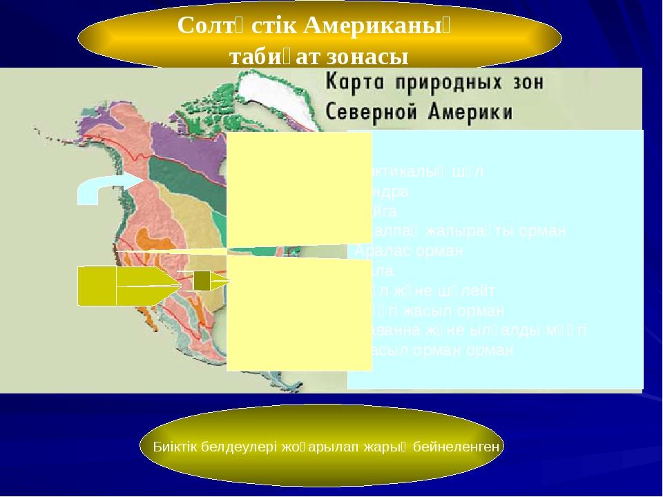 Солтүстік Американың табиғат зонасы Арктикалық шөл Тундра Тайга Жалпақ жапыра...