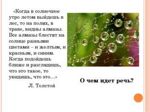 «Когда в солнечное утро летом выйдешь в лес, то на полях, в траве, видны алм