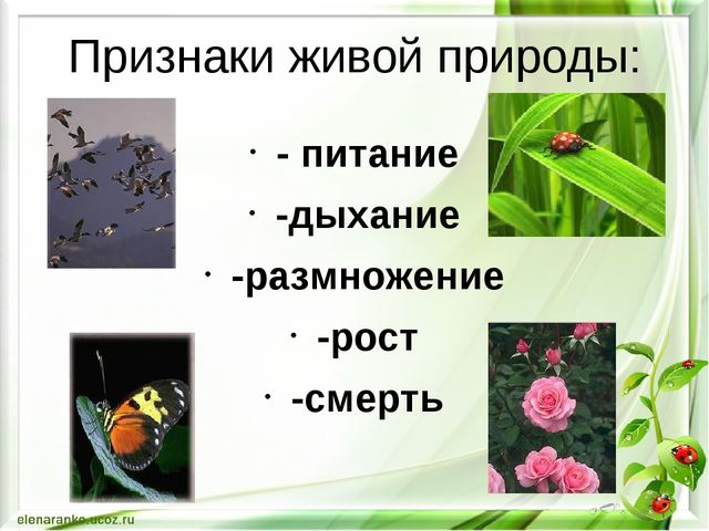 Признаки живой природы: - питание -дыхание -размножение -рост -смерть