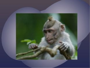 В зоопарке, в синей клетке Ловко прыгает по сетке, Корчит рожи, ест бананы Кт