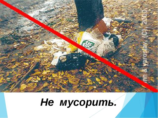 Не повреждать кору на деревьях.