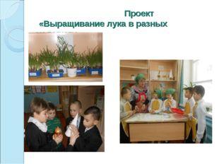 Проект «Выращивание лука в разных условиях»