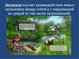 Экологияизучает взаимодействия живых организмов между собой и с окружающей и