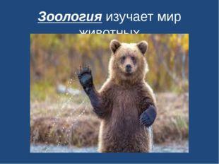 Зоология изучает мир животных