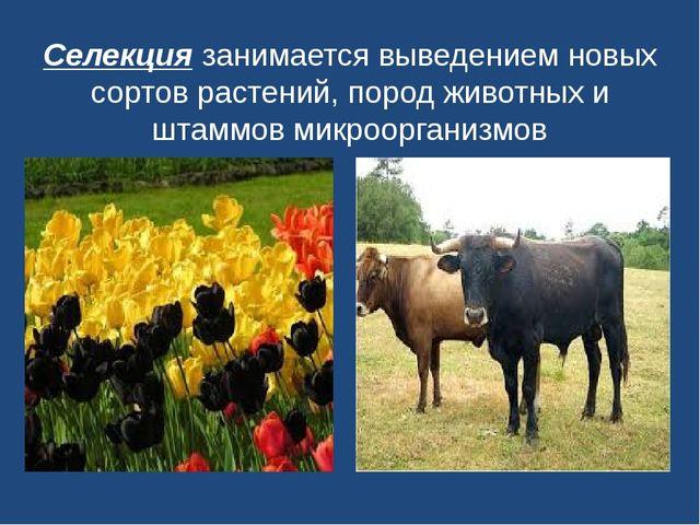 Селекциязанимается выведением новых сортов растений, пород животных и штаммо...