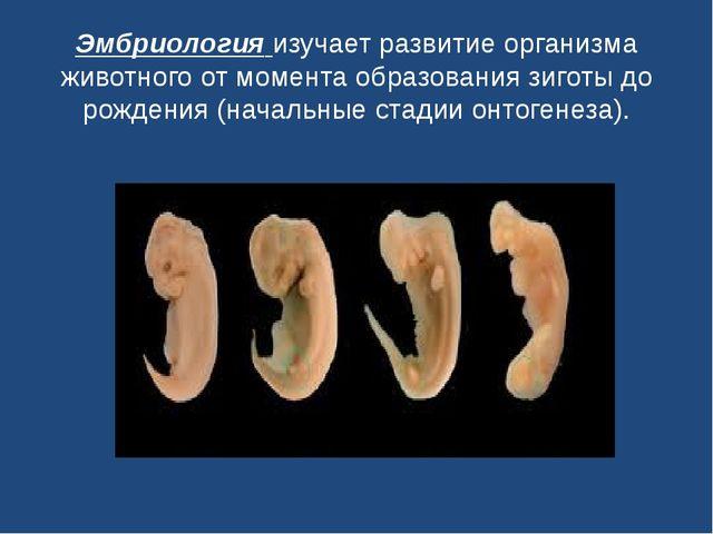 Эмбриологияизучает развитие организма животного от момента образования зигот...