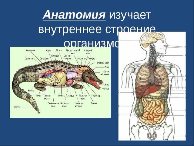 Анатомияизучает внутреннее строение организмов.