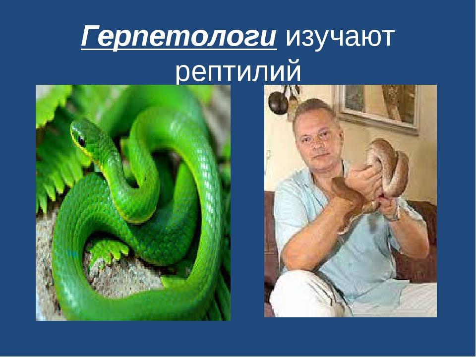 Герпетологи изучают рептилий