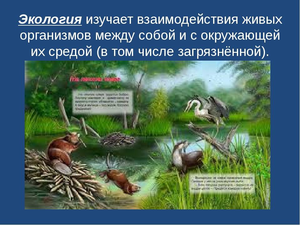 Экологияизучает взаимодействия живых организмов между собой и с окружающей и...