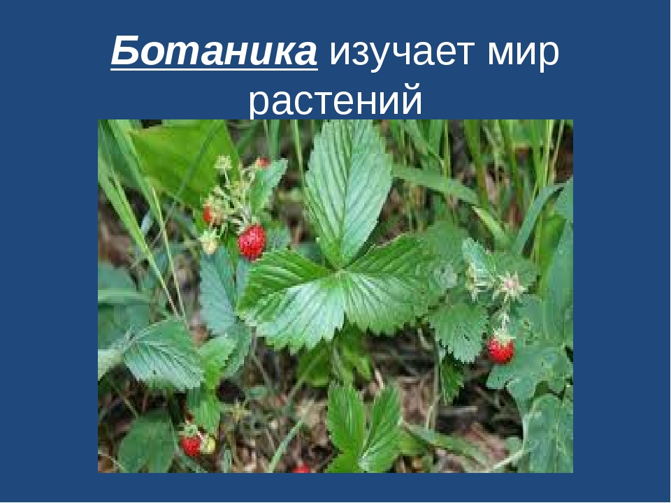 Ботаника изучает мир растений