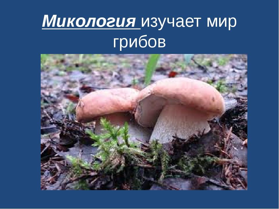 Микология изучает мир грибов