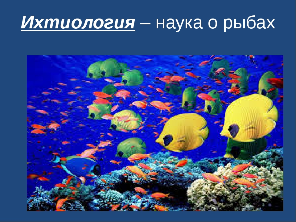 Ихтиология – наука о рыбах
