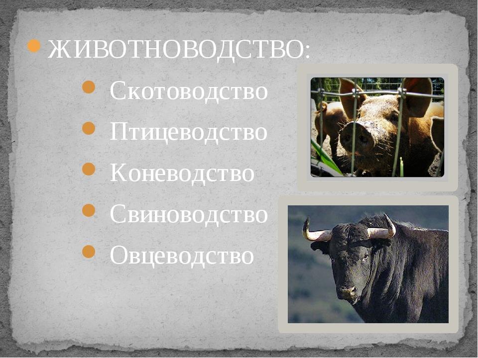 ЖИВОТНОВОДСТВО: Скотоводство Птицеводство Коневодство Свиноводство Овцеводство