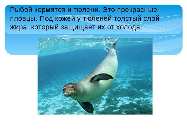 Рыбой кормятся и тюлени. Это прекрасные пловцы. Под кожей у тюленей толстый с...