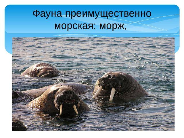 Фауна преимущественно морская: морж,