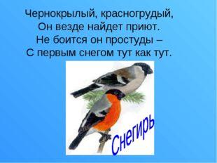Чернокрылый, красногрудый, Он везде найдет приют. Не боится он простуды – С п