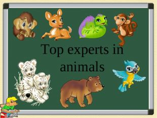 Top experts in animals