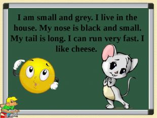I am small and grey. I live in the house. My nose is black and small. My tail