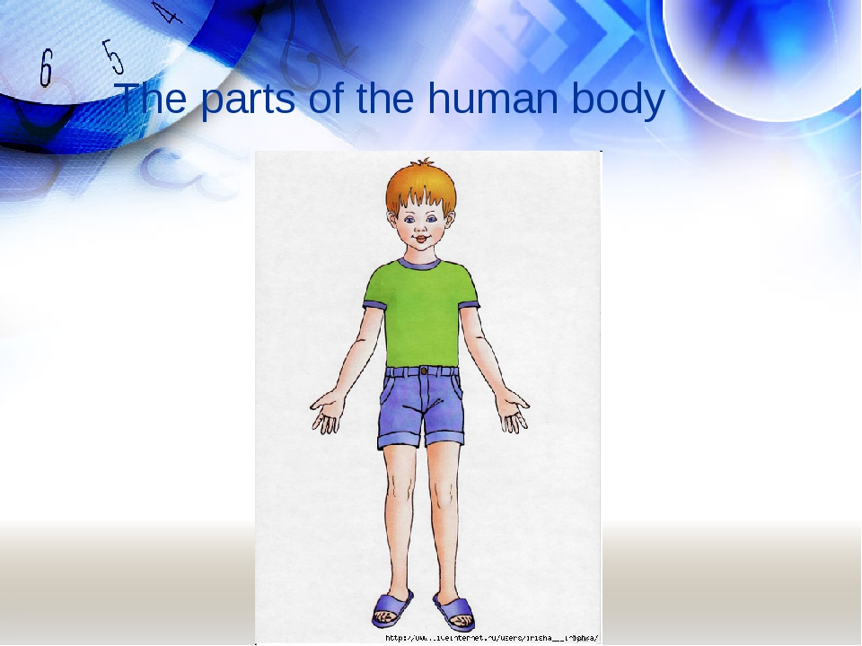 The parts of the human body