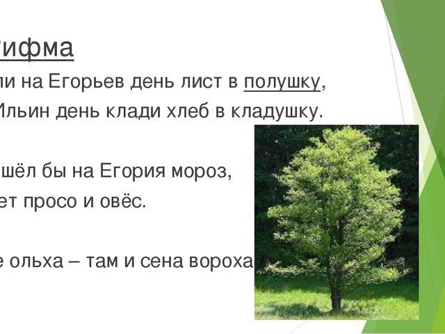 Рифма Коли на Егорьев день лист в полушку, на Ильин день клади хлеб в кладуш...