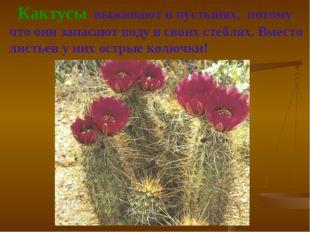 Кактусы выживают в пустынях, потому что они запасают воду в своих стеблях. В