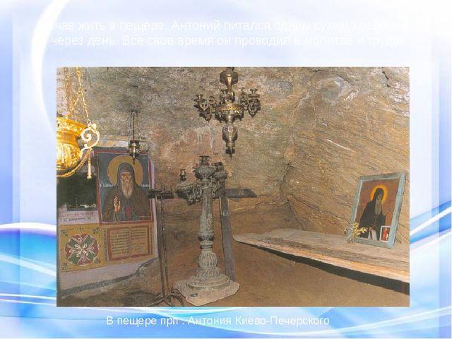 Начав жить в пещере, Антоний питался одним сухим хлебом, и то через день. В...