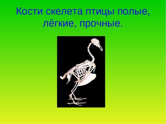Кости скелета птицы полые, лёгкие, прочные.