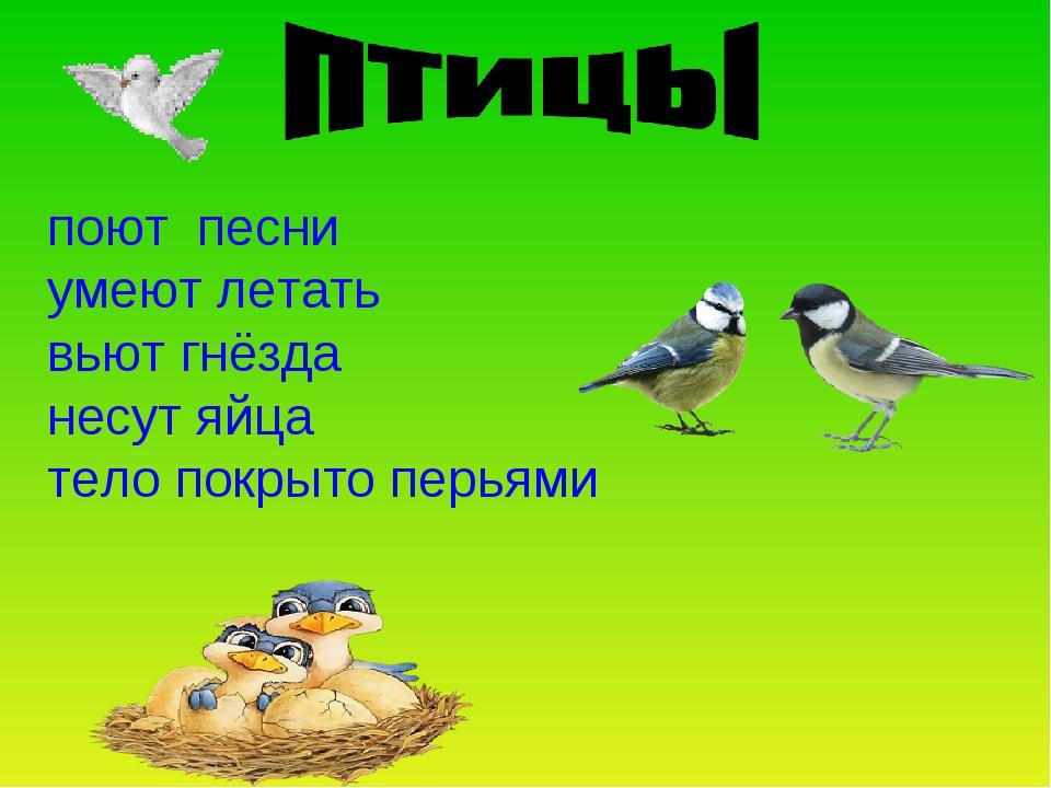 поют песни умеют летать вьют гнёзда несут яйца тело покрыто перьями