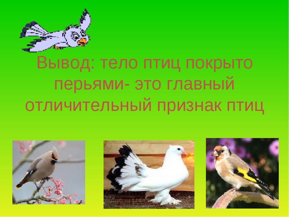 Вывод: тело птиц покрыто перьями- это главный отличительный признак птиц