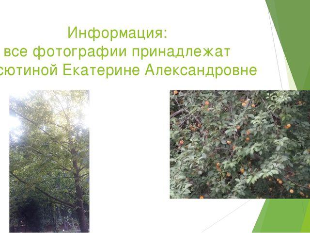 Информация: все фотографии принадлежат Васютиной Екатерине Александровне