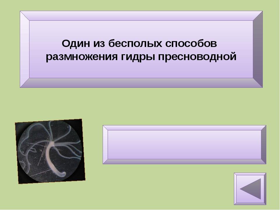 Как называется оплодотворённая яйцеклетка? Зигота