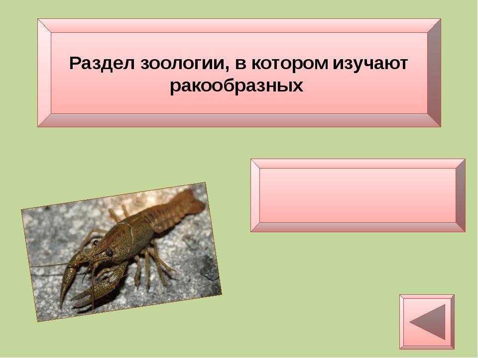 Раздел зоологии ,в котором изучают моллюсков Малакология